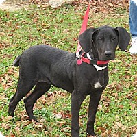 Adopt A Pet :: Blitzen - Brattleboro, VT