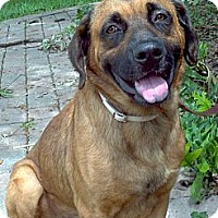 Adopt A Pet :: Cooper - loxahatchee, FL