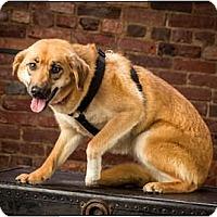 Adopt A Pet :: Ruby - Owensboro, KY