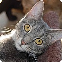 Adopt A Pet :: Sylvia - New Port Richey, FL