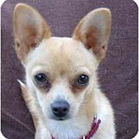Adopt A Pet :: Angie - San Francisco, CA