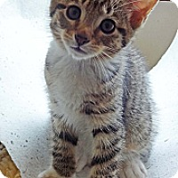 Adopt A Pet :: Morgan - N. Billerica, MA