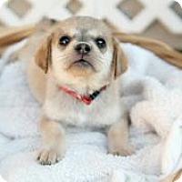 Adopt A Pet :: Weezy Jefferson - Austin, TX