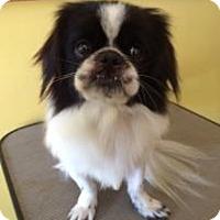 Adopt A Pet :: Jacob - Gainesville, FL
