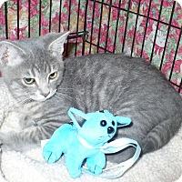 Adopt A Pet :: Olaf - Colmar, PA