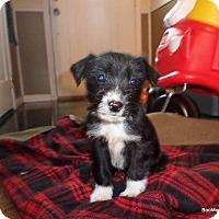 Adopt A Pet :: Panda - Huntsville, AL