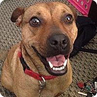 Terrier (Unknown Type, Medium) Mix Dog for adoption in Richmond, Virginia - Butterbean