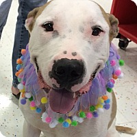 Adopt A Pet :: Mr. Parker - Raritan, NJ