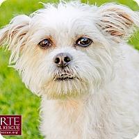 Adopt A Pet :: Jessa - Marina del Rey, CA