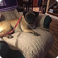 Adopt A Pet :: 2016-3001 Lexi - Summerfield, NC