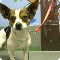 Adopt A Pet :: This DOG A458022 is in Dager at Moreno Valley - Beverly Hills, CA