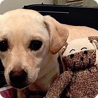 Adopt A Pet :: Poppy - San Francisco, CA