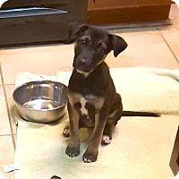 Adopt A Pet :: Judd - Austin, TX