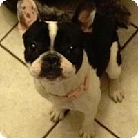 Adopt A Pet :: Delilah - Columbus, OH