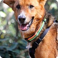 Shepherd (Unknown Type) Mix Dog for adoption in Marietta, Georgia - Windy
