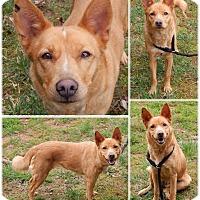 Adopt A Pet :: Bthann - Bardonia, NY