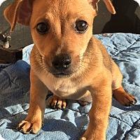 Adopt A Pet :: Dahli#1M - Orlando, FL