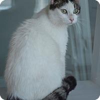 Adopt A Pet :: Mocha - Prince George, VA