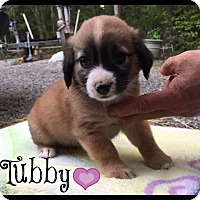 Adopt A Pet :: Tubby - Allentown, PA