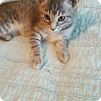 Adopt A Pet :: Clary - Covington, KY