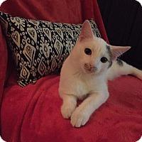 Adopt A Pet :: Jonesy - Columbus, OH