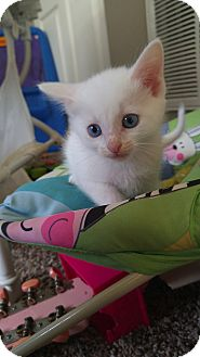 Domestic Shorthair Kitten for adoption in Baltimore, Maryland - Mr. Ray