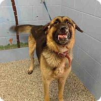 German Shepherd Dog Mix Dog for adoption in San Bernardino, California - URGENT on 10/19 SAN BERNARDINO