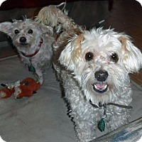 Adopt A Pet :: **BARNEY - Peralta, NM