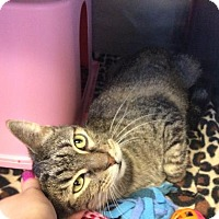 Adopt A Pet :: Gatlin - Janesville, WI