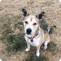 Adopt A Pet :: Zeus - Denver, CO