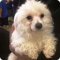 Adopt A Pet :: Tiara - Concord, CA