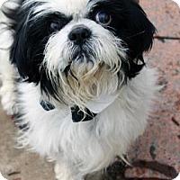 Adopt A Pet :: Hamilton - Norman, OK