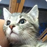 Adopt A Pet :: Magic - Shippenville, PA