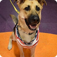 Adopt A Pet :: DiNozzo - Greensboro, NC