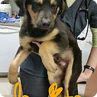 Adopt A Pet :: Dorito - Garden City, MI