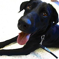 Adopt A Pet :: Anslee - Aurora, IL