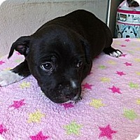 Adopt A Pet :: Willie - Pompano Beach, FL