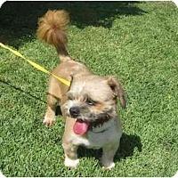 Adopt A Pet :: Max - Los Alamitos, CA