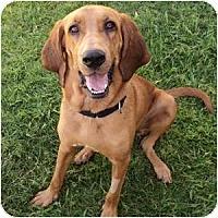 Adopt A Pet :: Bayou - Phoenix, AZ