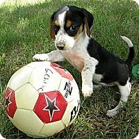 Adopt A Pet :: Valeta - Novi, MI