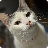 Adopt A Pet :: Fina (foster care) - Philadelphia, PA