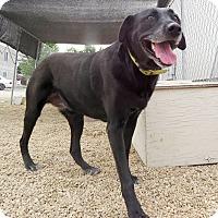 Adopt A Pet :: Tara - Meridian, ID