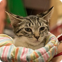 Adopt A Pet :: Pepper - New York, NY