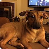 Adopt A Pet :: Tolku - New York - Woonsocket, RI