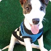 Adopt A Pet :: Rosco - San Diego, CA