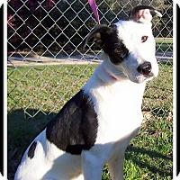 Adopt A Pet :: Moolah - Pawling, NY