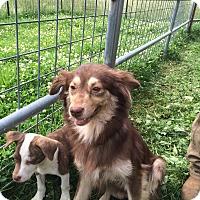Adopt A Pet :: Nono - Hohenwald, TN
