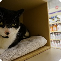 Adopt A Pet :: Precious - Salem, NH
