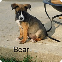 Adopt A Pet :: Bear - mooresville, IN