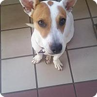 Adopt A Pet :: Vanilla - New York, NY